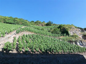 vineyard location Pommerell